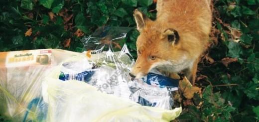 Los ahuyentadores son un sistema eficaz para mantener alejados a los animales.