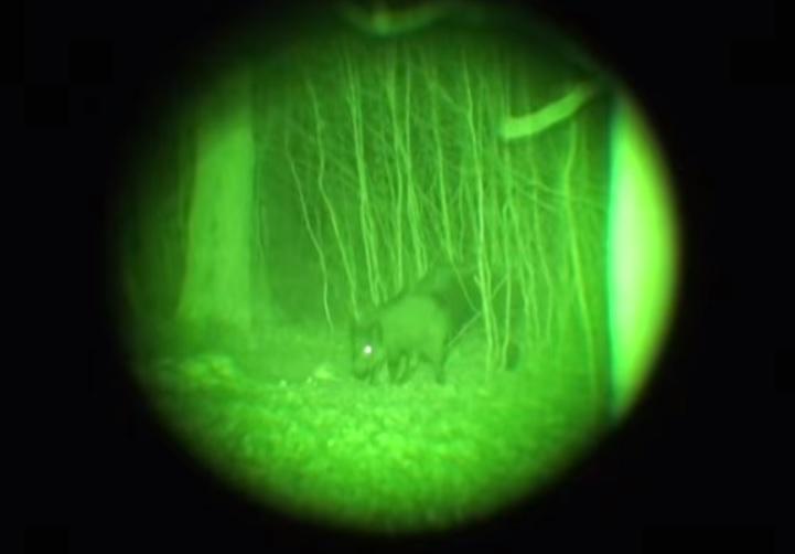 Los dispositivos de visión nocturna son cada vez más demandados.