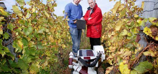 robot agricola en viñedo